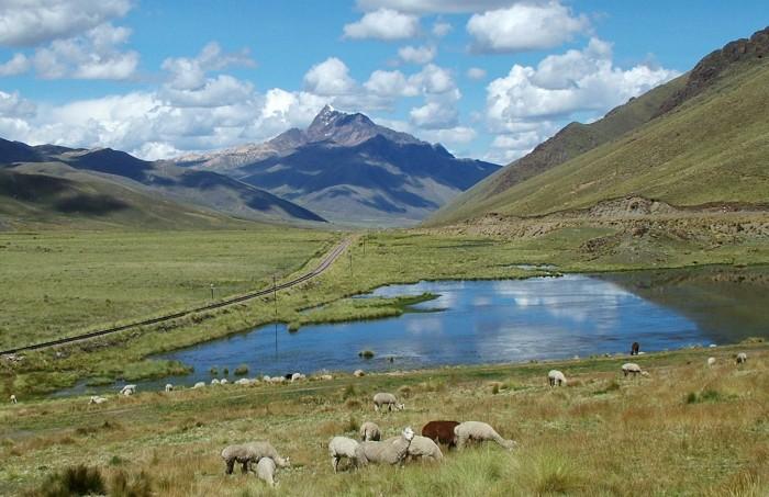 Altiplano.Alpaca