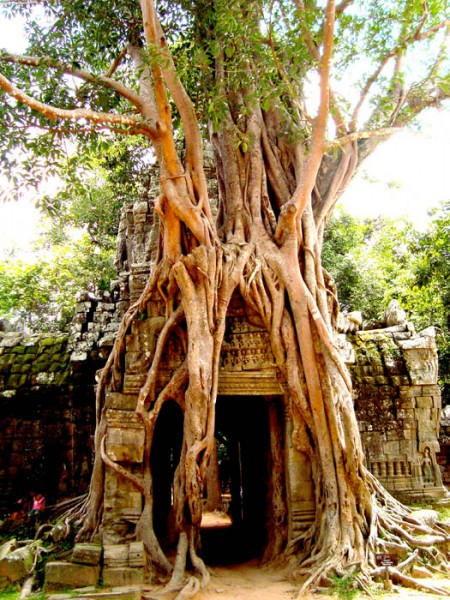 Angkor Temple-ROOTS