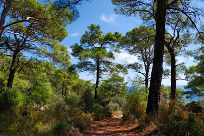 DT.Lycian path.trees7856332