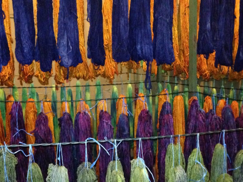 Purple and gold hand-dyed yarns dry at the Malabrigo mill.
