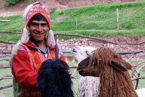 Feeding some hairy llamas