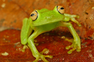 Mike P FROG