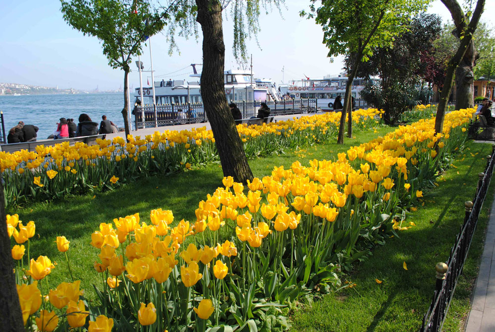 This shows the hundreds of tulips that bloom all over Istanbul every year.